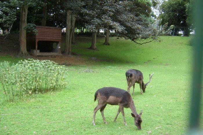 Parc de Saint Omer